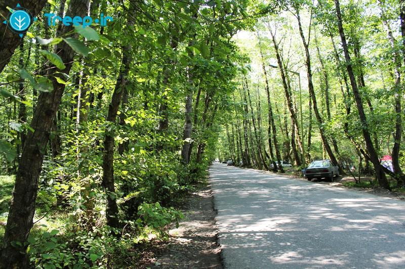پارک-جنگلی-گیسوم_27