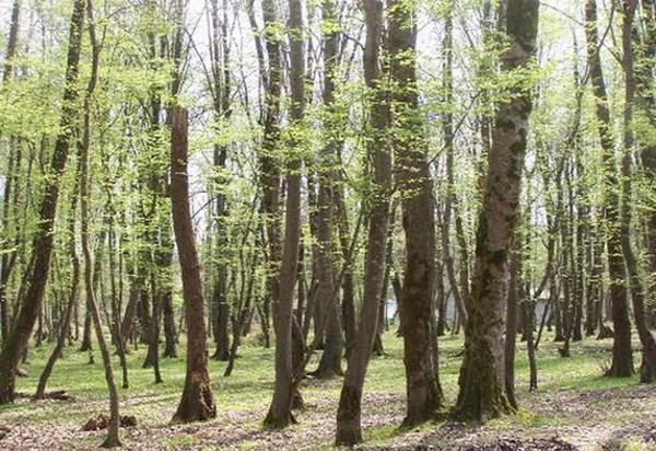 پارک-جنگلی-سیسنگان_3