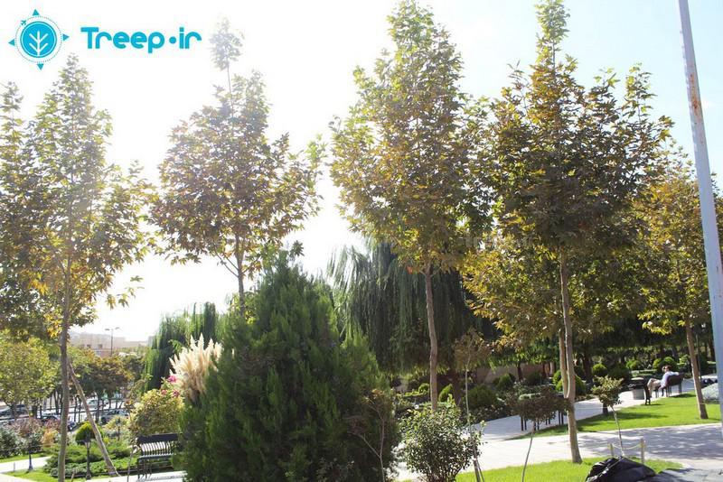پارک-ایران-زمین_4