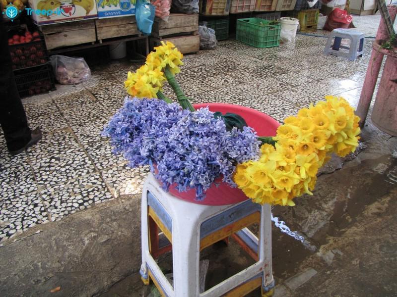 بازار-سنتی-ساری_20