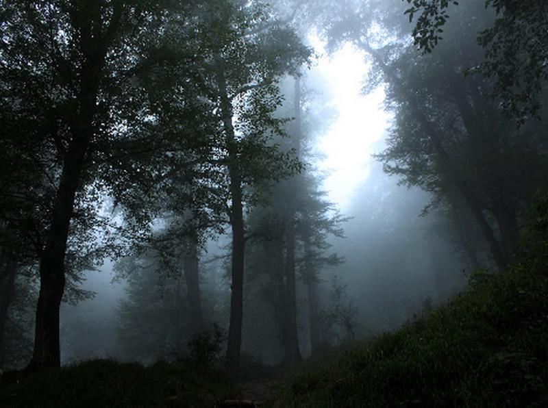 جنگل-دالخانی_6