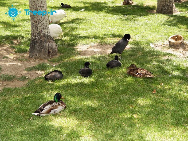 باغ-پرندگان_18