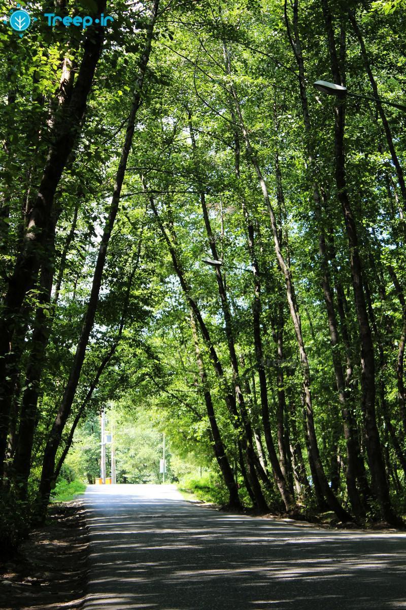 پارک-جنگلی-گیسوم_1