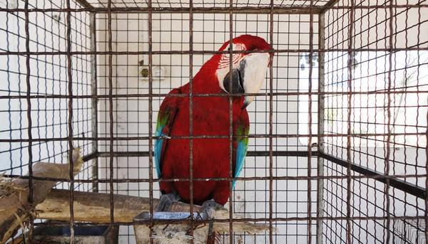 باغ-پرندگان-آستارا_4