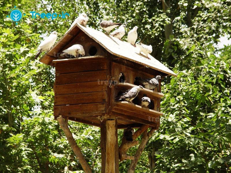 باغ-پرندگان_17