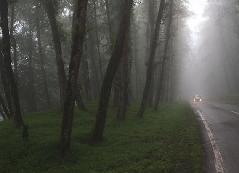جنگل-دالخانی_4
