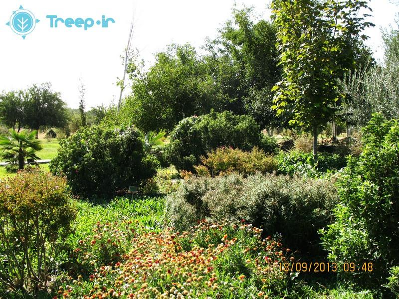 باغ-گياهشناسي-ملي-ايران_13