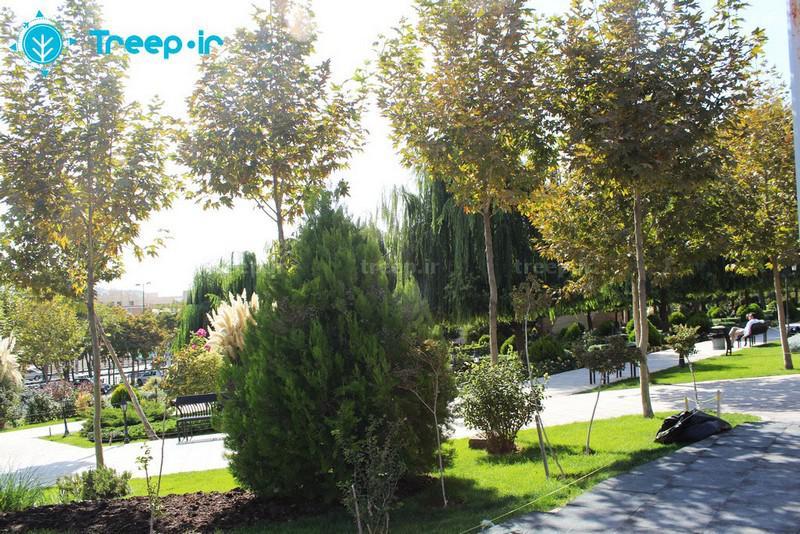 پارک-ایران-زمین_3