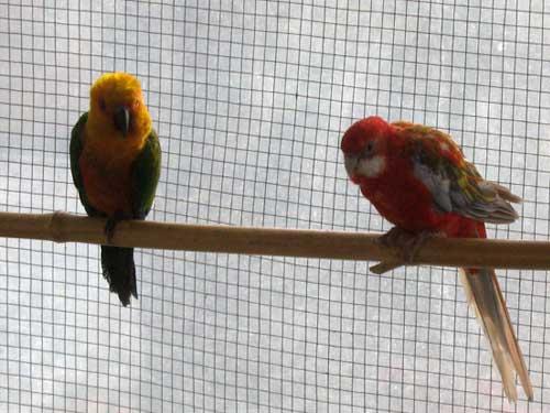 باغ-پرندگان_13